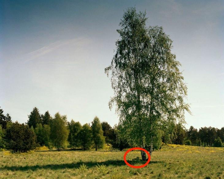 Francotirador escondido en fotografía de un bosque alemán