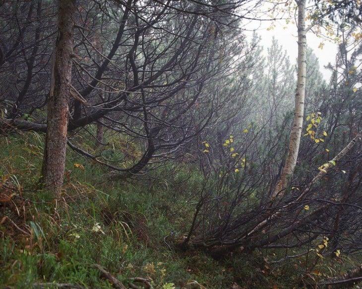 fotografía de un bosque alemán