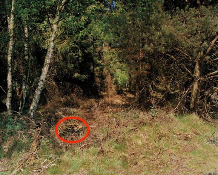 rancotirador escondido en fotografía de un bosque alemán