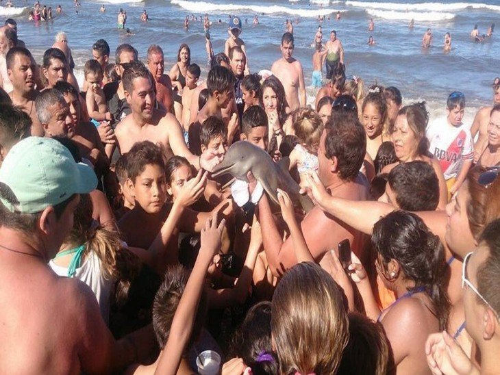 Matan a delfín bebé para tomarse selfie