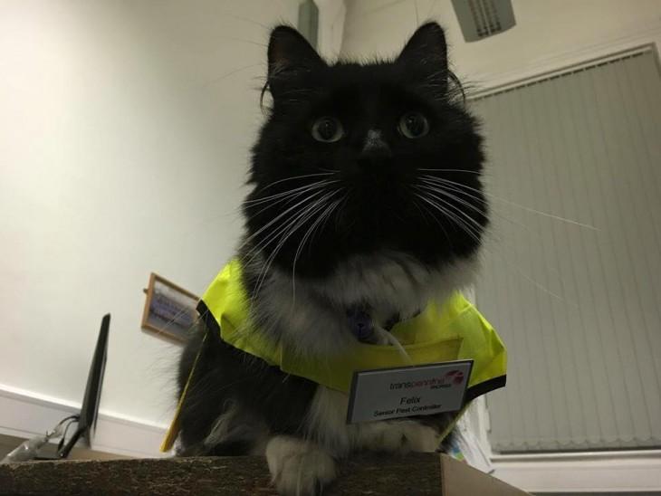 Félix el Gato que trabaja