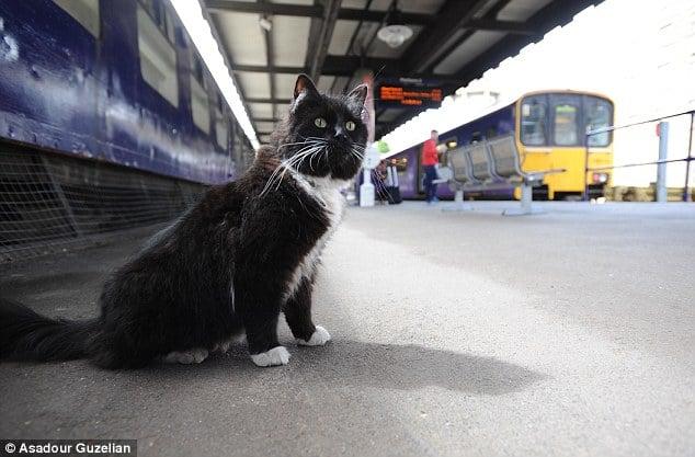Félix el Gato en la estación del tren