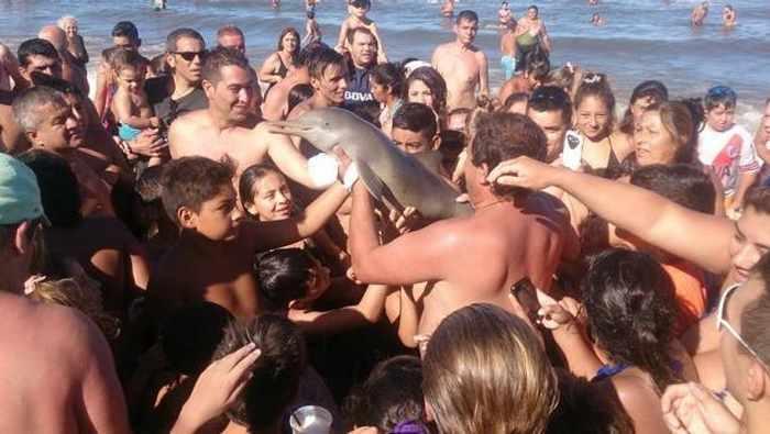 Delfín Argentina