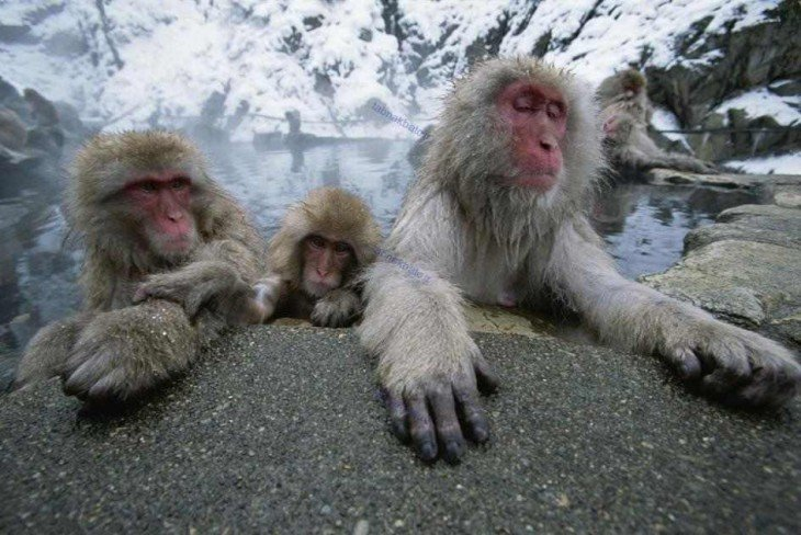 Chango macaco