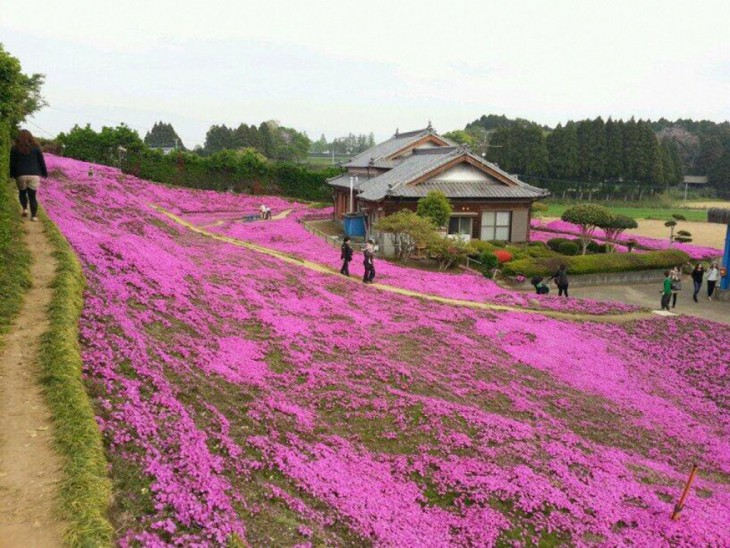 Kuroki flowers