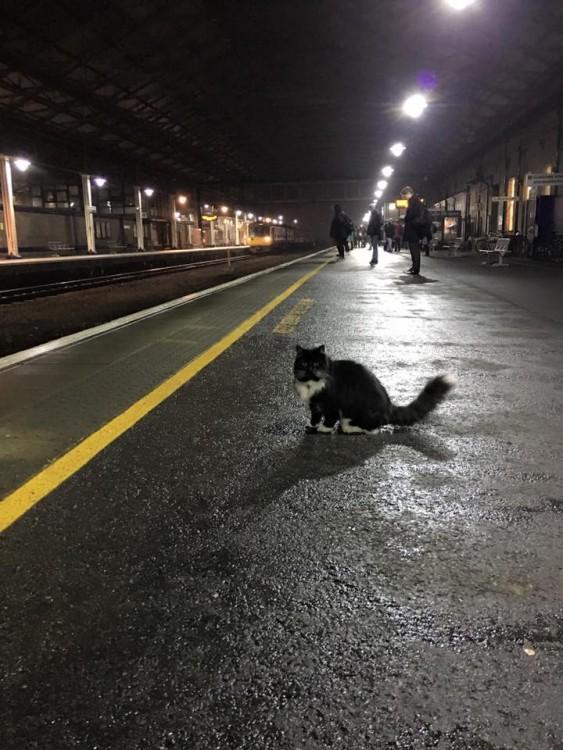 Félix de noche en la estación