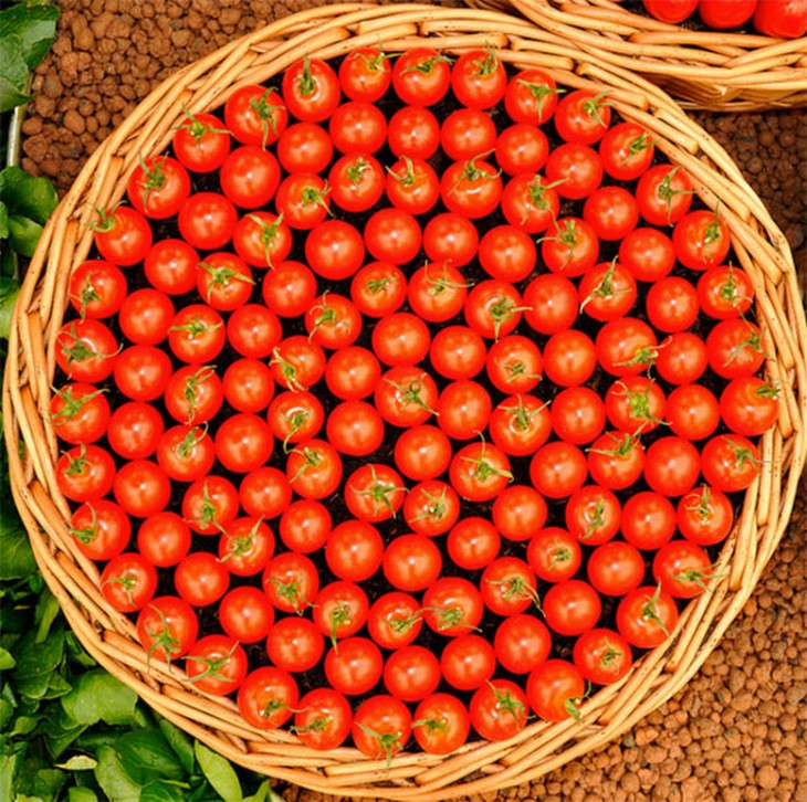 tomates acomodados en canastas
