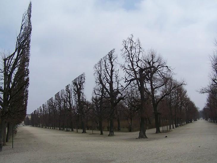 árboles podados