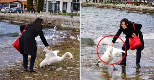 Cover-¡Más-estupidez-humana!-Una-mujer-mata-a-cisne-para-tomarse-una-selfie-con-él