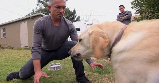 Increíble: ¡César Millán es investigado por Crueldad con los Animales!