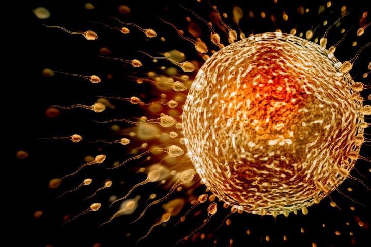 Espermas alrededor de un óvulo