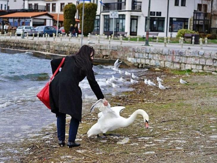 Mujer mata cisne