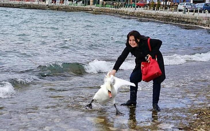 Mujer cisne