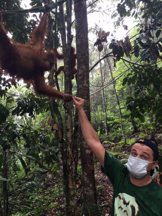 DiCaprio de activista en Sumatra