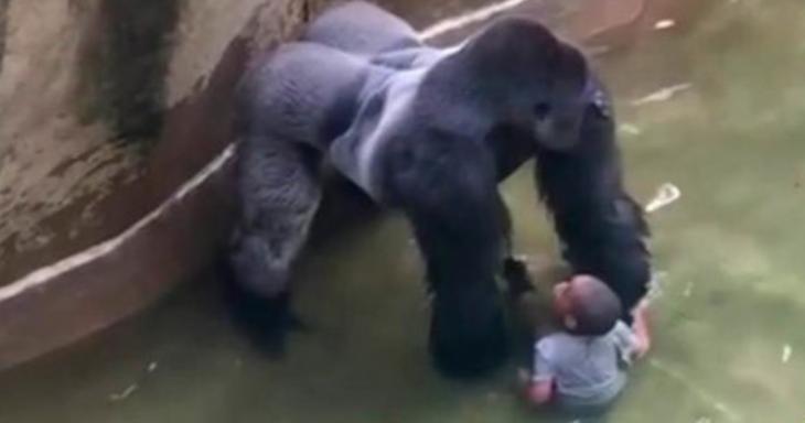 gorila muerto y niño