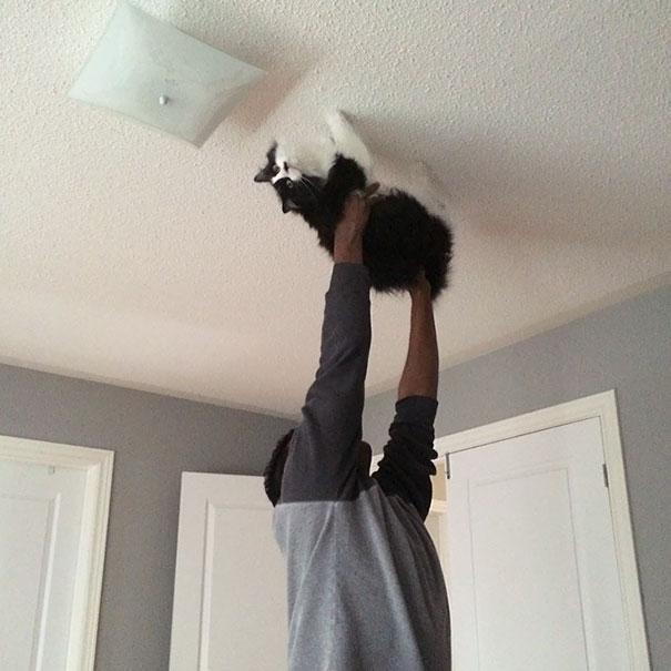 spider gato