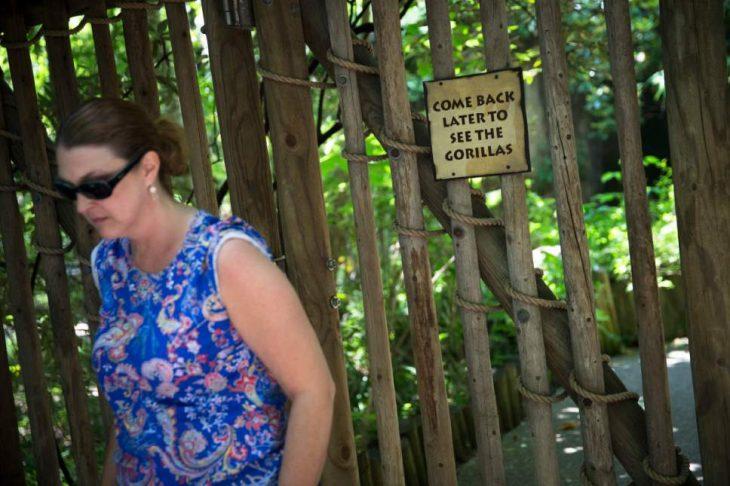 Cerrada el área de gorilas en Cincinnati