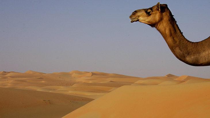 Desierto en los Emiratos Árabes Unidos