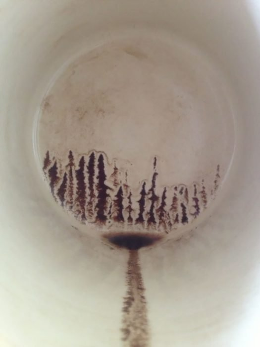 bosque en taza de cafe