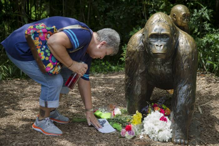 gorila muerto