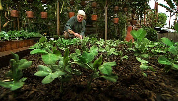 hombre en una hortaliza