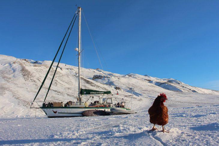 gallina en hielo y barco
