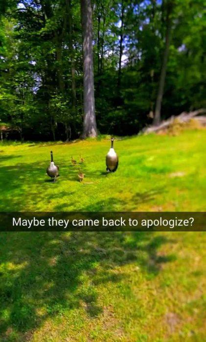 snapchat ¿Regresarían para disculparse?