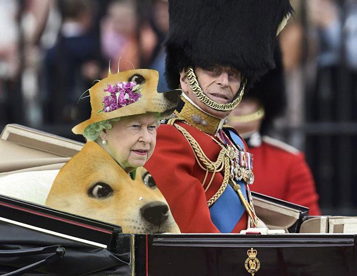perro en traje reina