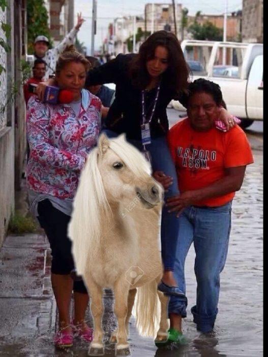 meme Lady reportera, en pony