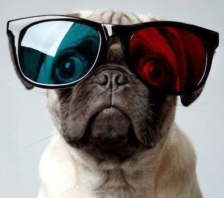 perro con lentes 3d