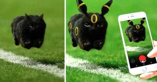 COVER Un gracioso gato se mete a un juego de Rugby