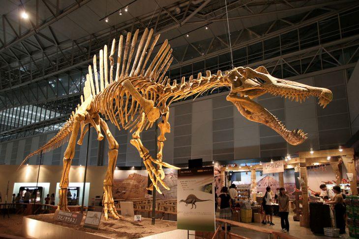 esqueleto dinosaurios