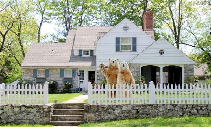 osos vecinos