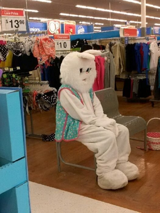 conejo en walmart