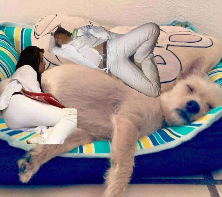 perro doctor se queda dormido