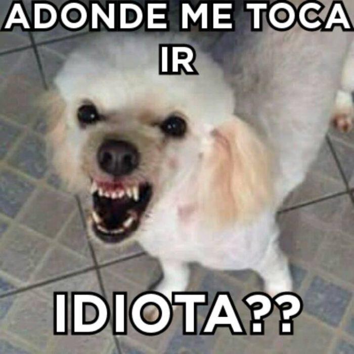Meme Luki