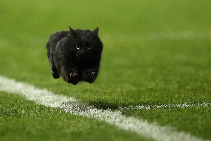 Gato negro corriendo por campo de estadio