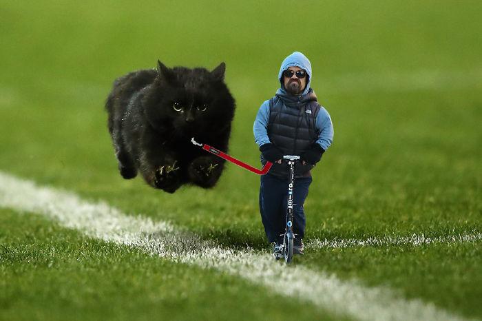 Batalla de Photoshop con gato negro