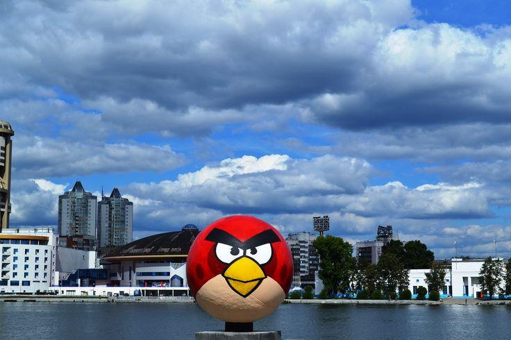 angry bird rusia