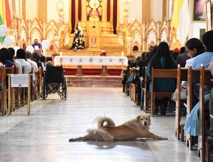 perro en iglesia