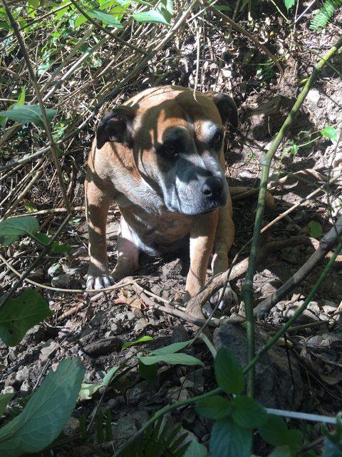 perro sentado en la tierra