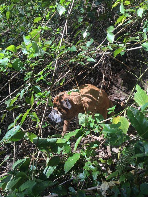 perro entre ramas