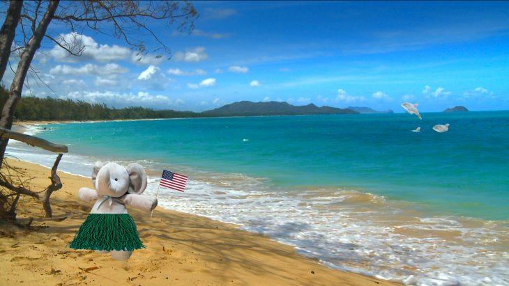 elefante Hawái