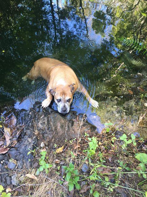 perro en una piedra