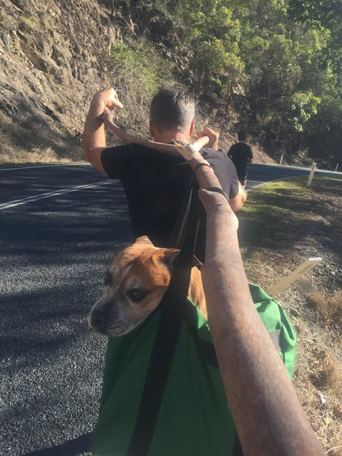 perro en una bolsa en un palo