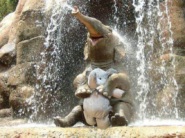 elefante de peluche con elefantes reales