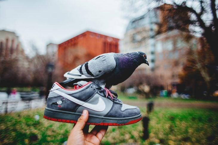 Nike SB Dunk Low Staple Pigeon