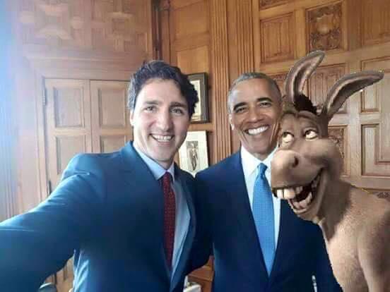burro obama