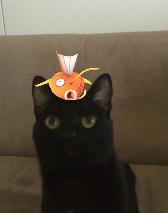 gato con pescado pokemon