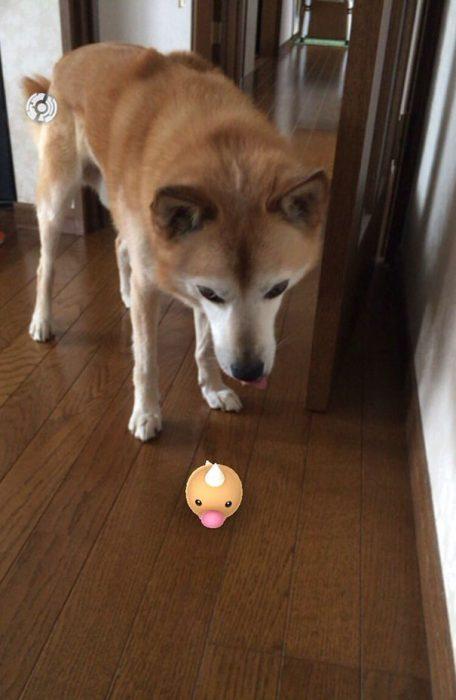 perro y pokemon